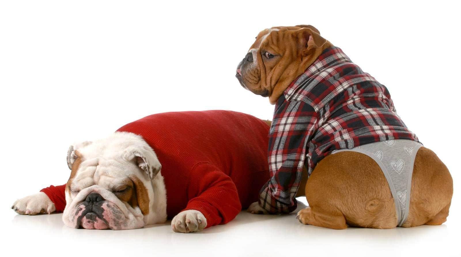 собаки в рубашках и трусах
