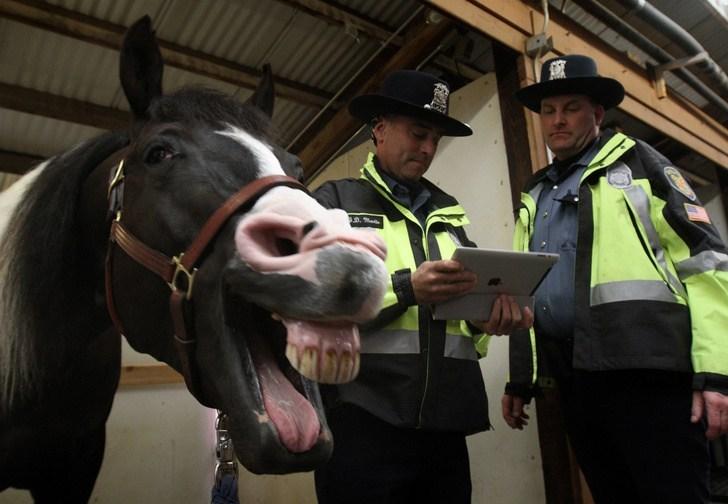 полицейские и лошадь