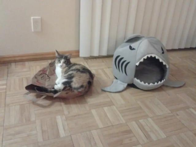 кошка и домик в виде акулы