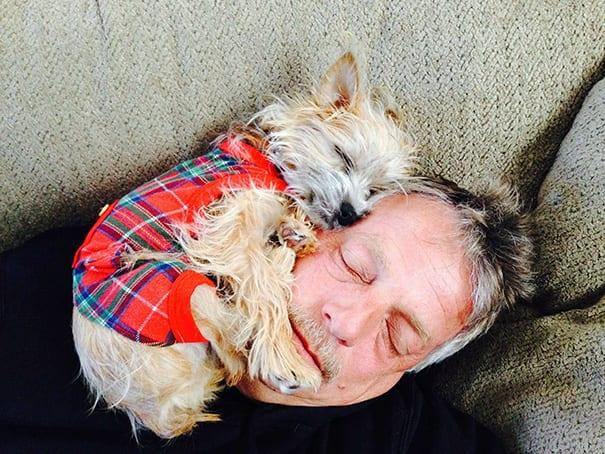 пес спит на хозяине