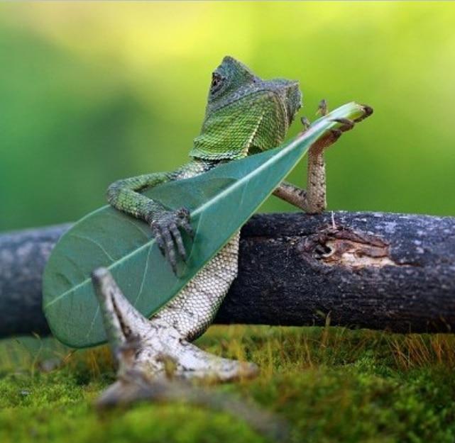 ящерица с листочком