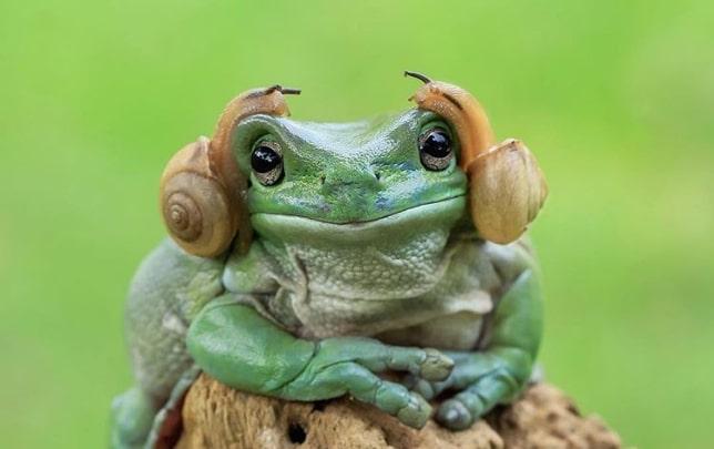 лягушка с улитками на голове