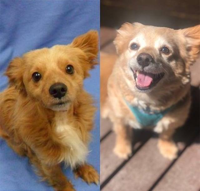 пес до и после спасения
