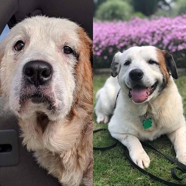 собака после спасения