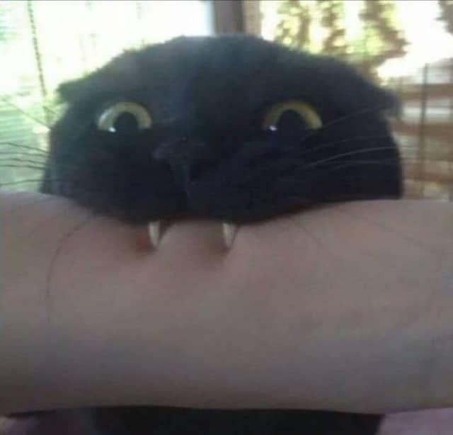 кот кусает руку человека