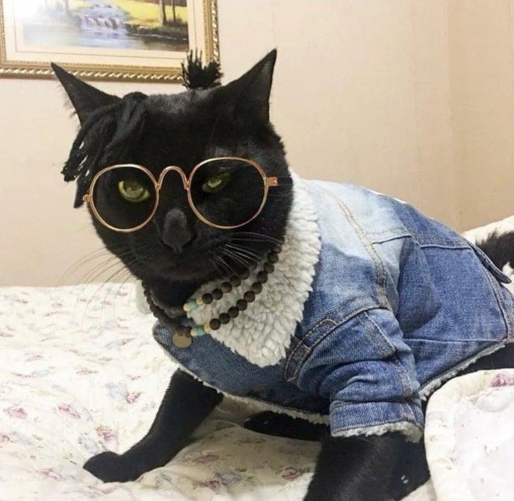 кошка в очках и джинсовой куртке