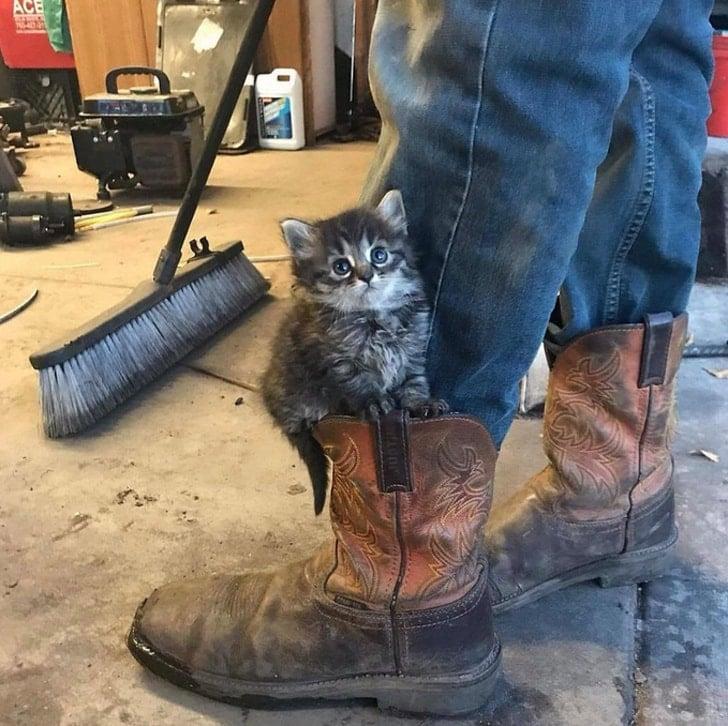 котенок в сапоге мужчины