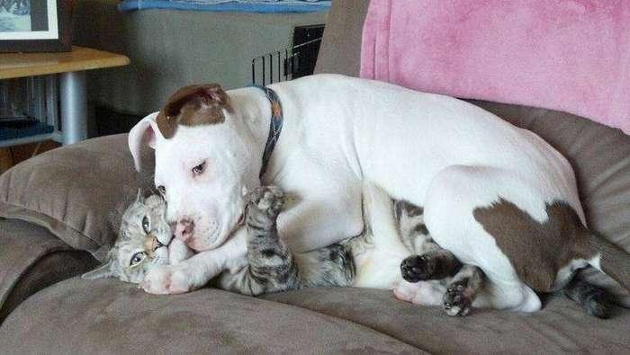 пес обнимается с котом