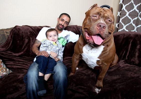 папа с ребенком и собака