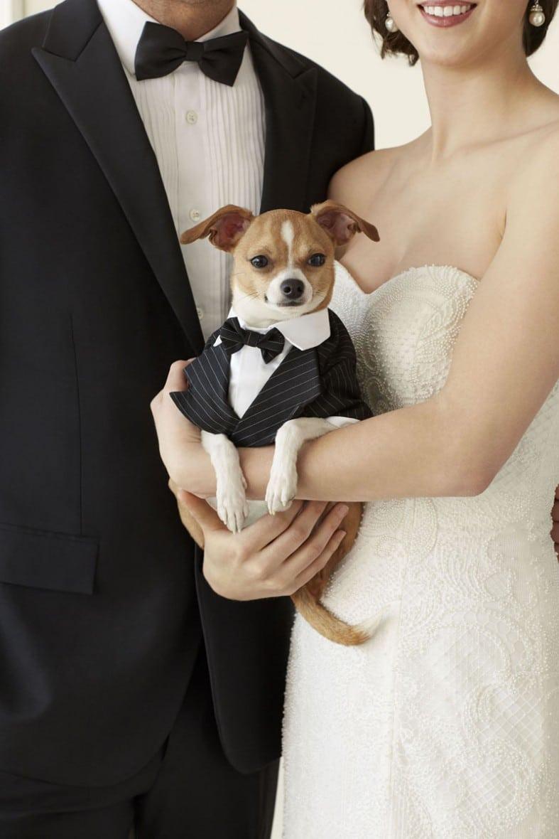 невеста держит пса на руках