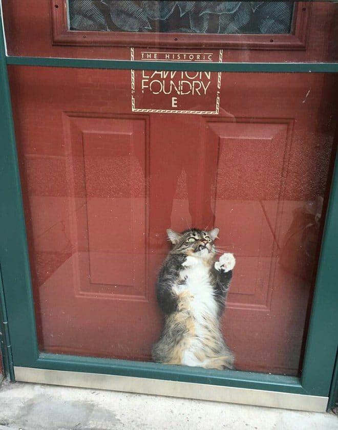кот застрял между дверьми