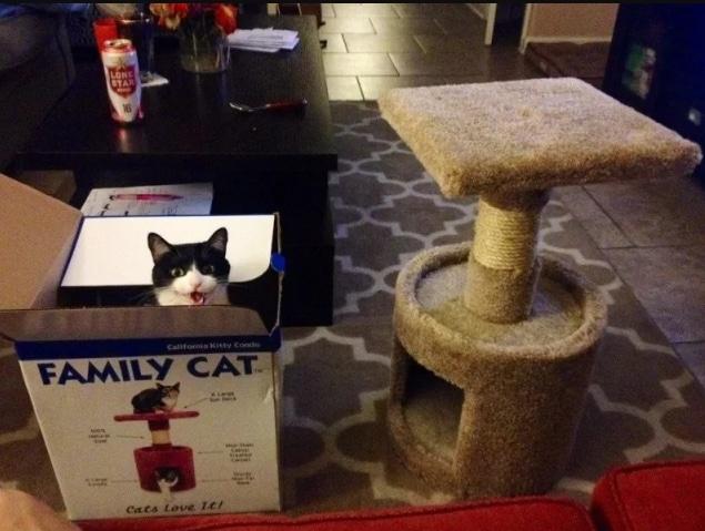 кот сидит в коробке