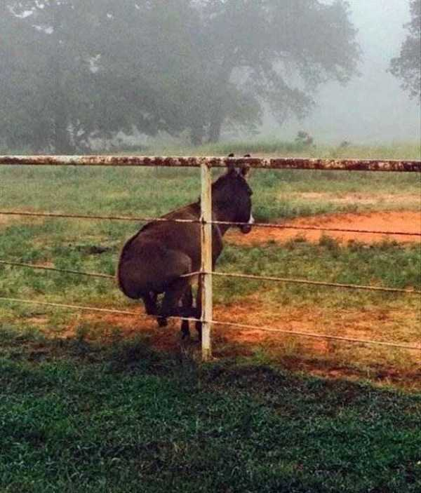 осел сидит на заборе