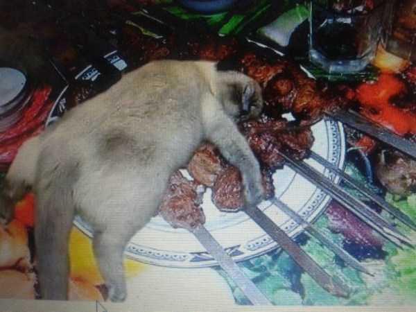 кошка лежит на шашлыке