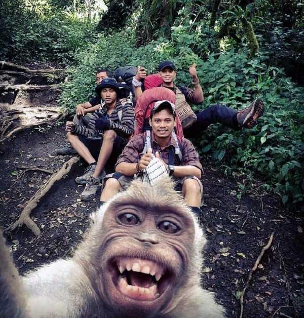 селфи парней с обезьяной