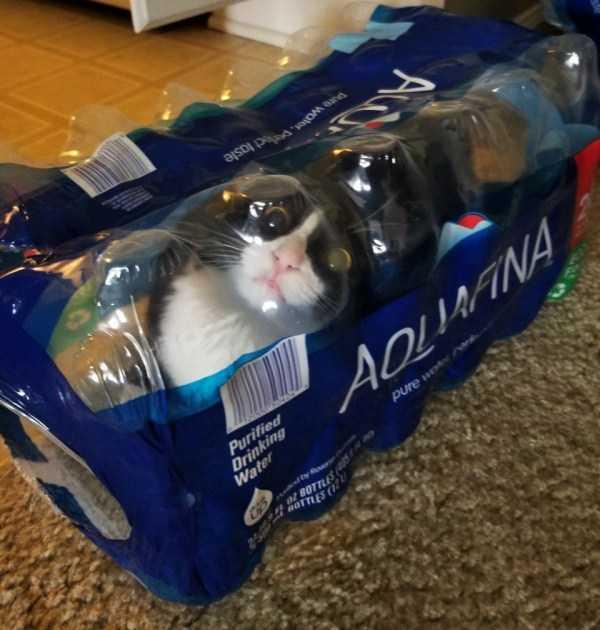 черно-белый кот в упаковке с водой