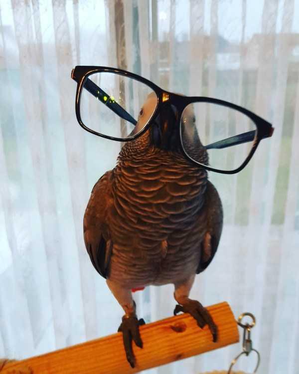 попугай в очках