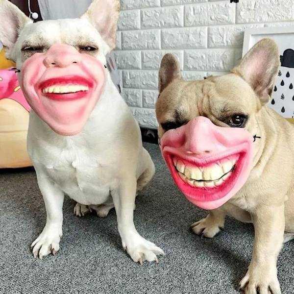 собаки в улыбающихся масках