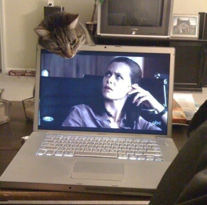 кот и ноутбук