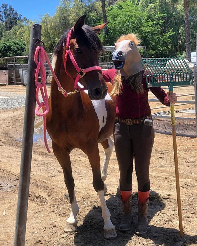 девушка рядом с лошадью
