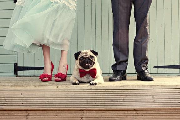 собака и жених с невестой
