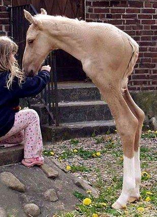 отфотошопленный конь