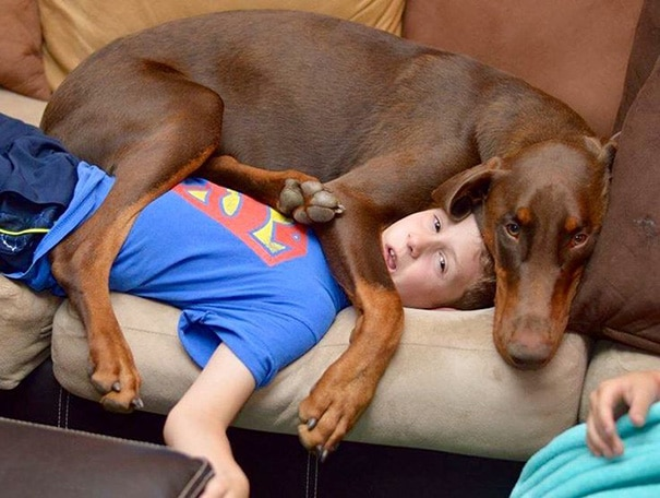 пес лежит на мальчике