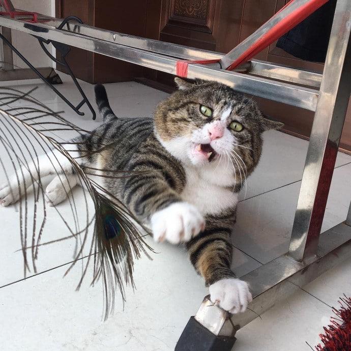 ах фей кот