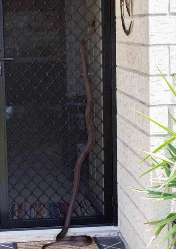 змея на заборе