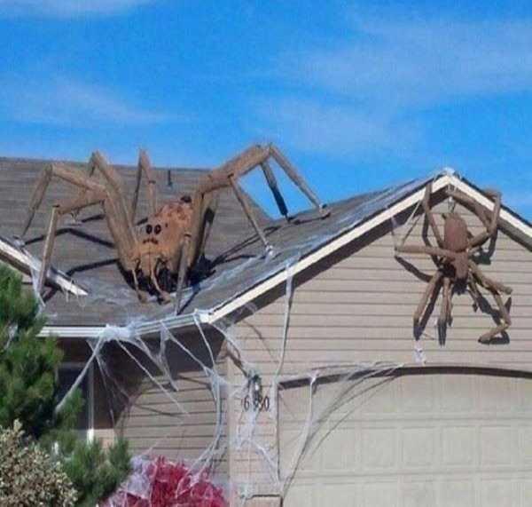 пауки на крыше дома