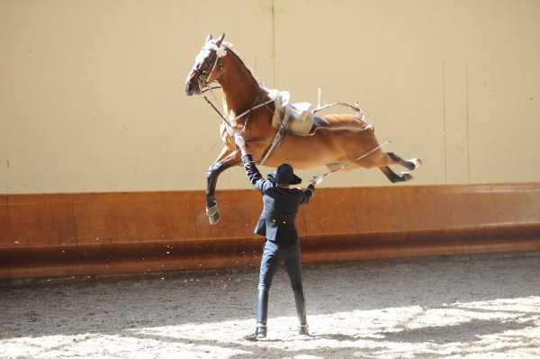 мужчина и лошадь в воздухе