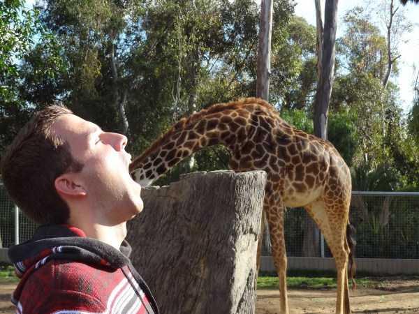 парень и жираф