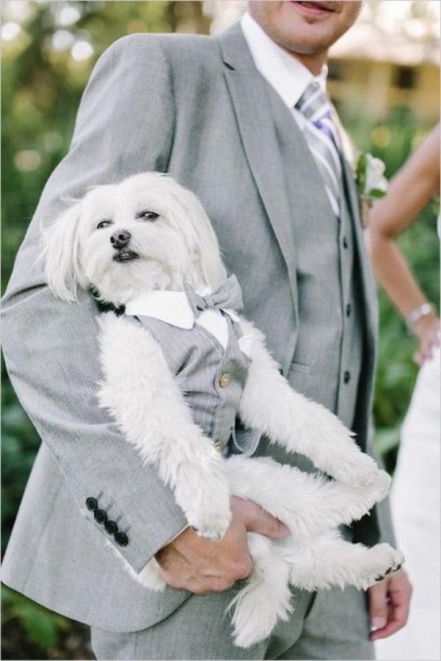 пес в костюме