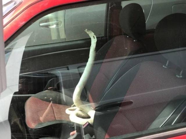 змея в салоне авто