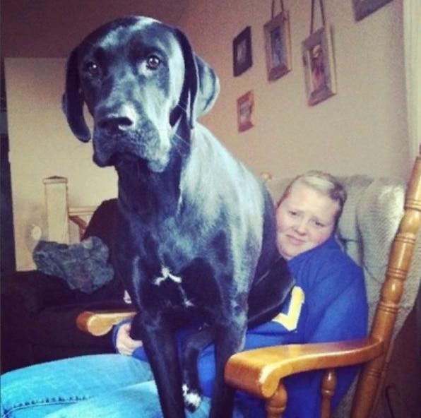 пес сидит на хозяйке