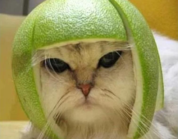 кот в кожуре от фрукта