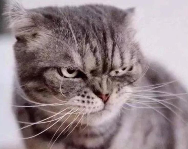 суровый кот