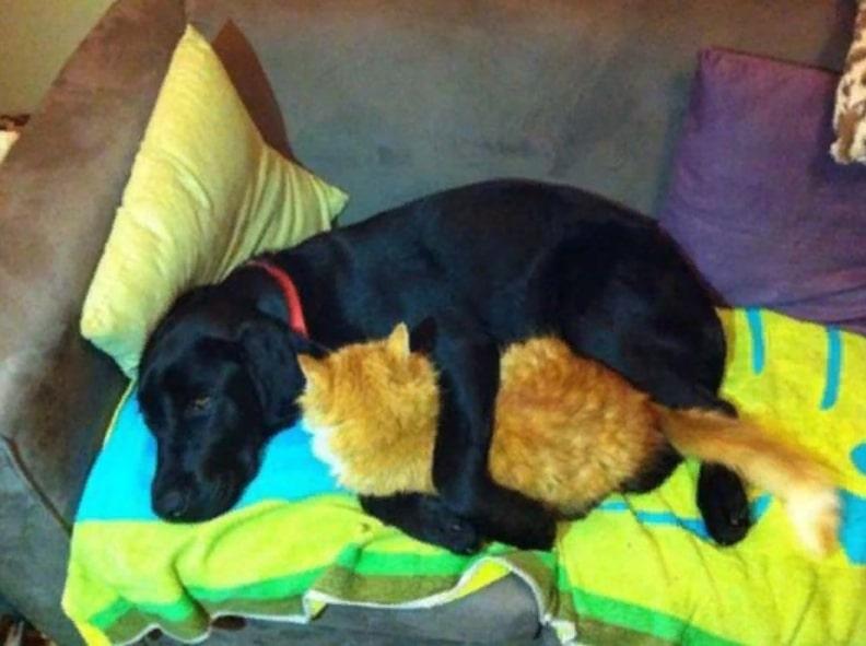 пес спит с котом