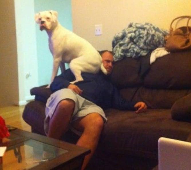 собака сидит на мужчине