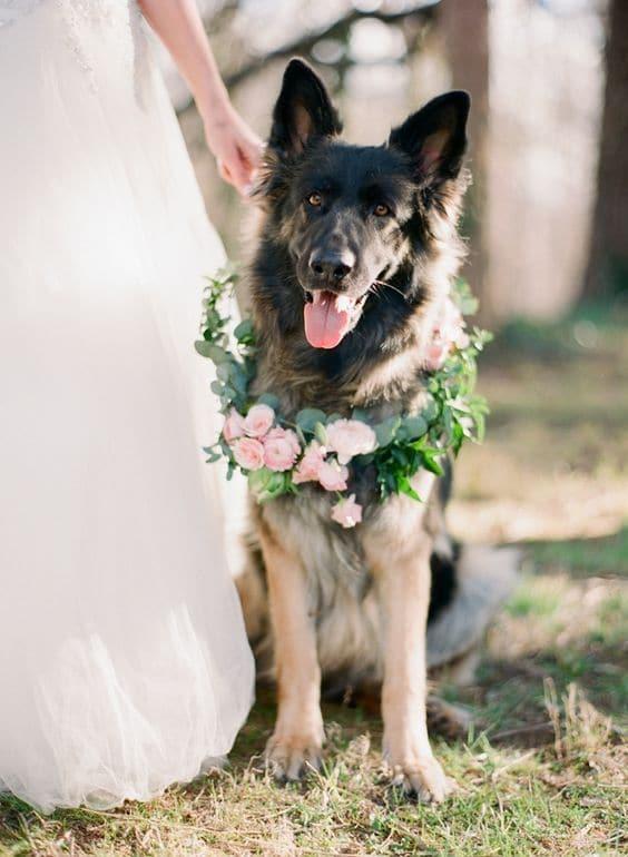 пес с цветочным венком