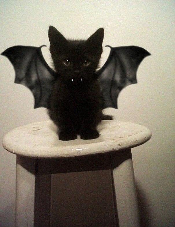 черный котенок с крыльями летучей мыши