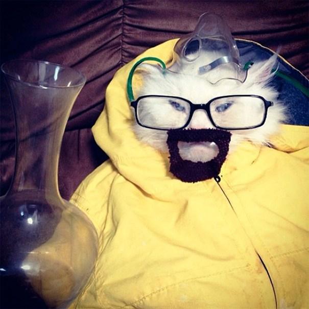 кот в очках и желтой кофте