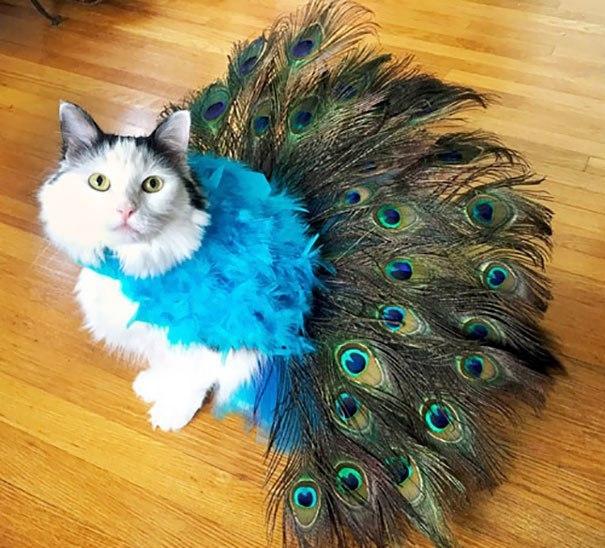кошка с перьями павлина