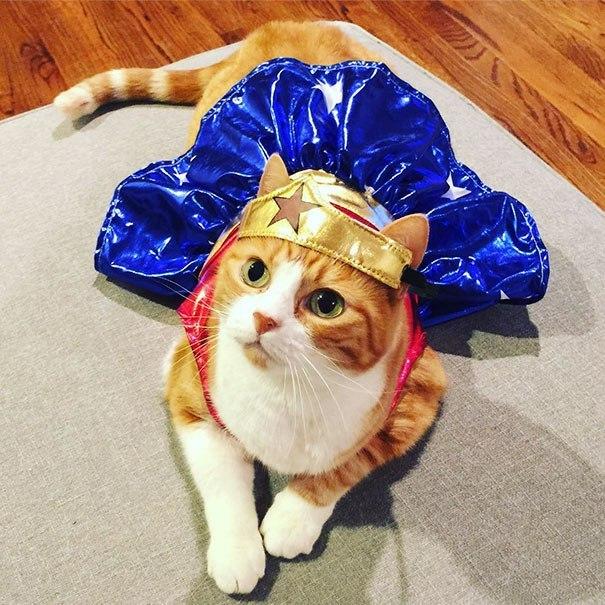 рыжая кошка в костюме чудо-женщины