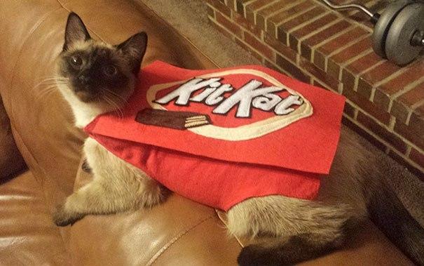 кошка в красном костюме