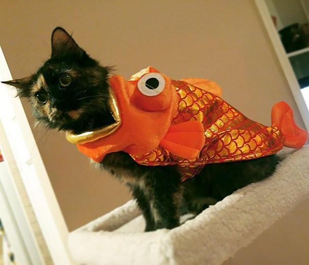 кошка в костюме рыбы