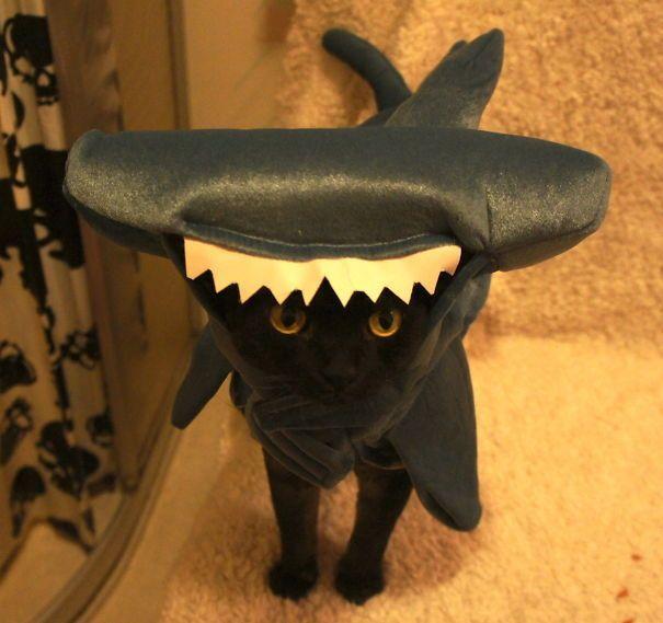 черная кошка в костюме акулы