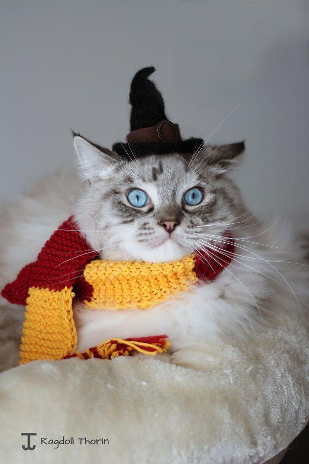кот в шляпе ведьмы