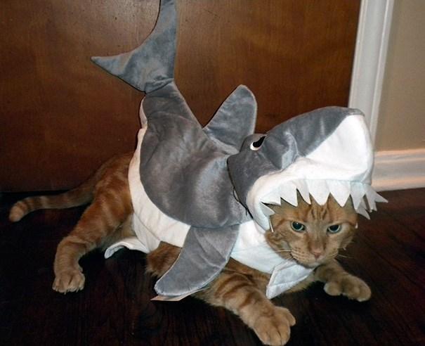 рыжий кот в костюме акулы