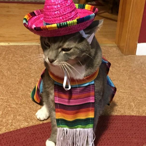кот в наряде мексиканца
